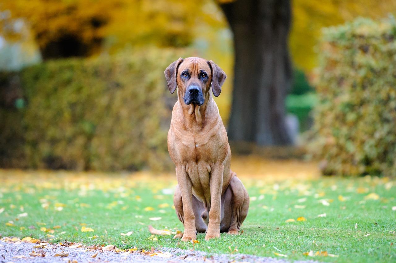 dog, bestfriend, cute